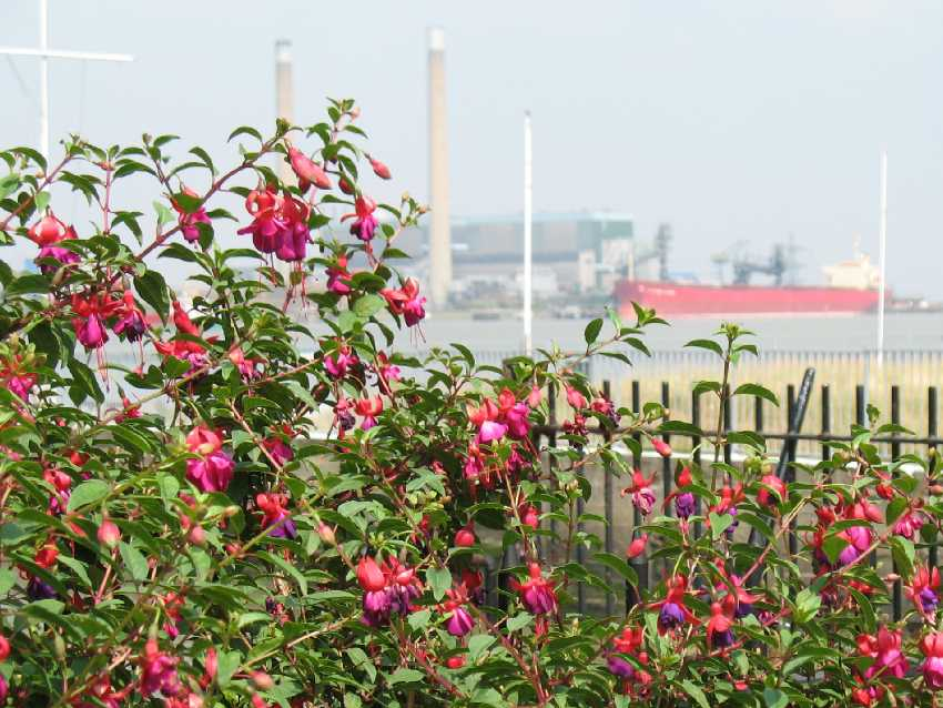 Gravesend, fuchsias and Tilbury Power Station