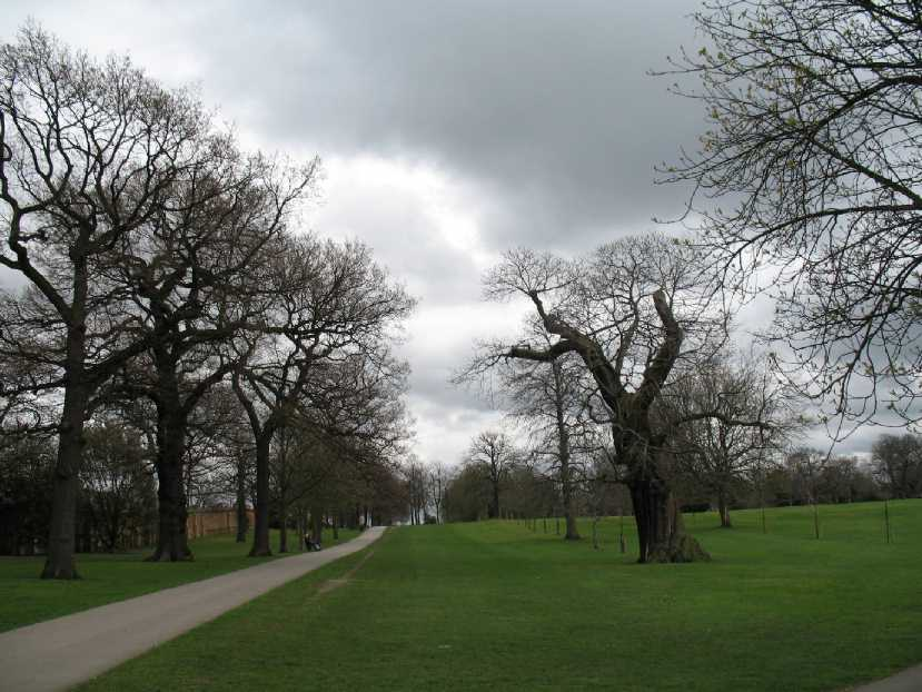 Greenwich Park, avenue of trees