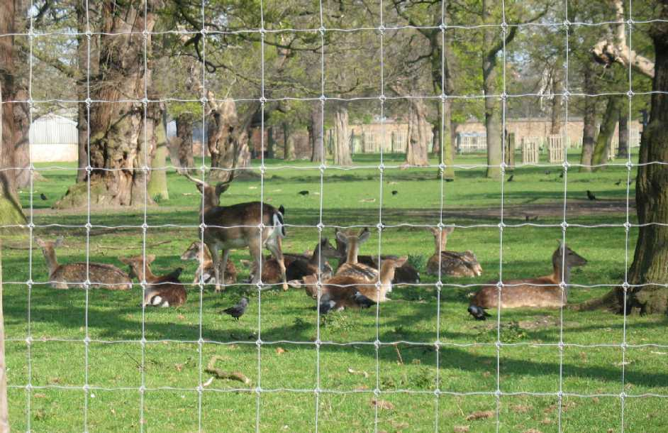 Greenwich Park, deer enclosure