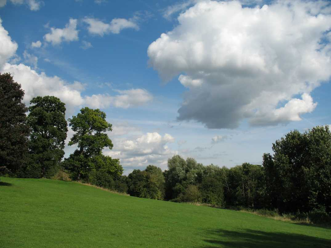 Maidstone Mote Park trees and grassland