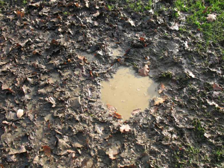 Leafy puddle in mud